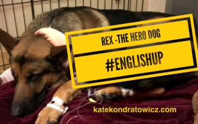 Rex – THE HERO DOG.. historia pewnego psiaka #EnglishUp